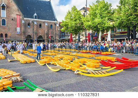 Carriers walking with many cheeses in the famous Alkmaar market