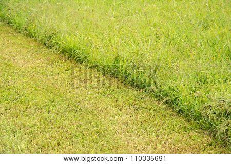 Diagonal line separating cut and uncut grass
