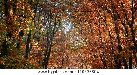 Top Branches Of Golden-leaved Trees