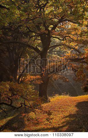 Picturesque Autumn Oak Grove
