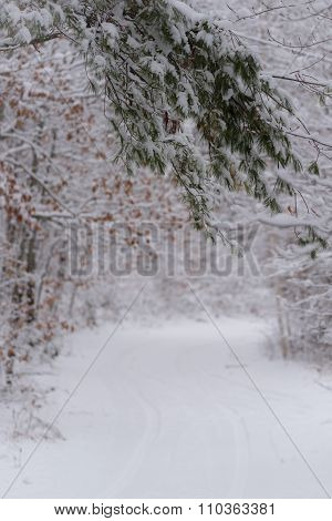 Snowy white evergreen branch nature scene background.