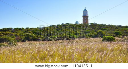 Woodman Point Lighthouse: Meadow Landscape