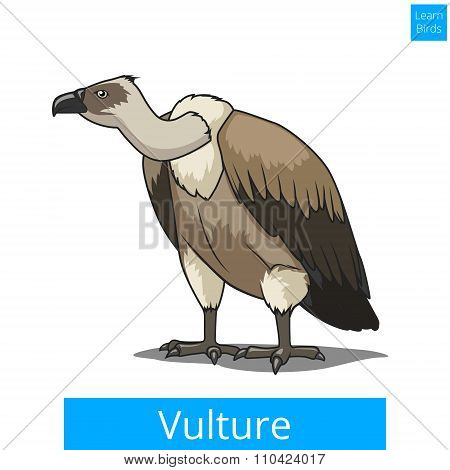 Vulture bird learn birds educational game vector