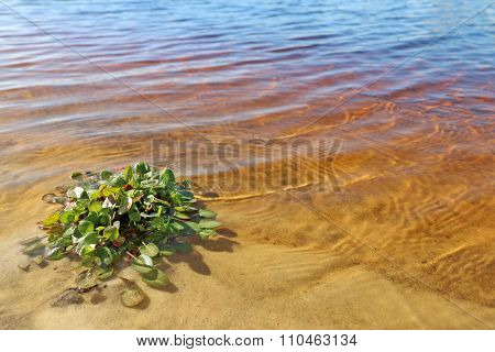 Tannic Water