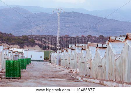 Industrial Veggie Growing Greenhouses In Spain