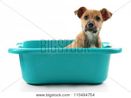 Puppy in bath isolated on white