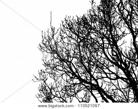 Tree silhouette in winter