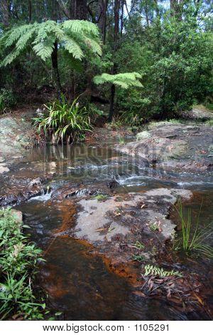 Bush Creek 2