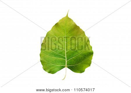 abstract colorful green leaf, isolated on white background