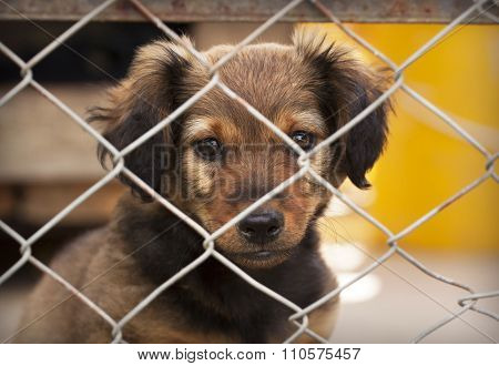 Sad dog Puppy