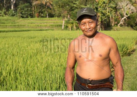 Ubud, Indonesia - September 5: A unidentified rice farmer works in the rice fields on a hot sunny afternoon near Ubud, Bali, Indonesia on September 5th 2014.