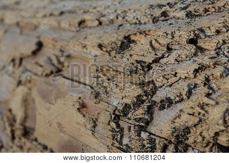 Old Wood Texture / Macro