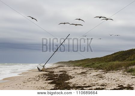 Pelicans Flying Over A Grounded Sailboat - Florida