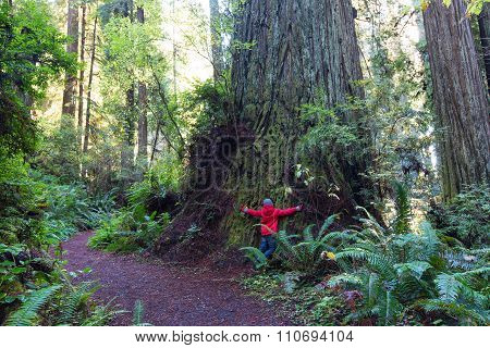 Kid In Redwood Forest