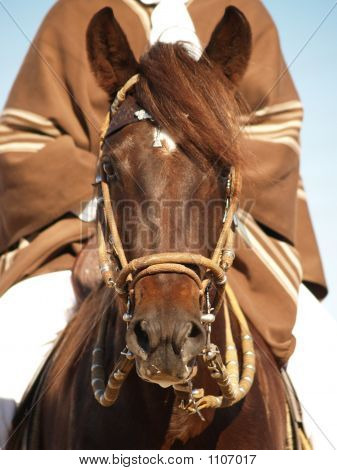 Horse Show 10