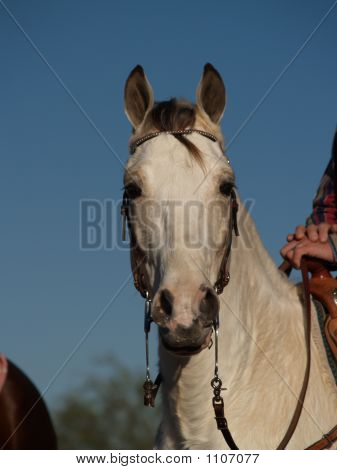 Horse Show 7