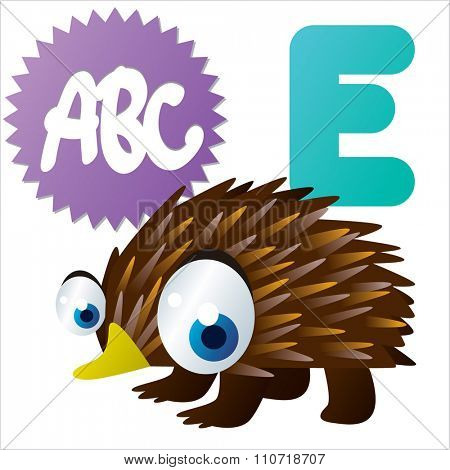 Vector cute funny colorful alphabet animals: E is for Echidna