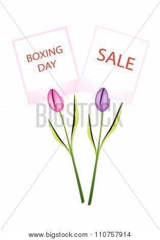 Boxing Day Of Photo Frames With Tulips