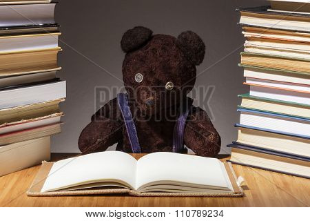Teddy bear is preparing for the difficult exam