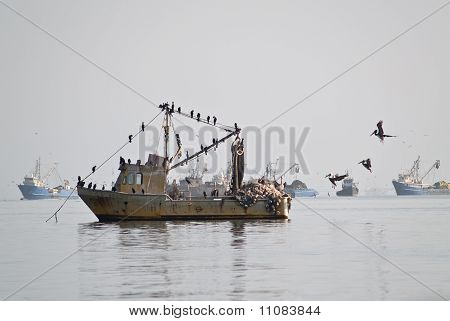 Pelicans On Fisher Ship