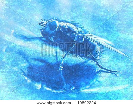 image from insect background series (fly)