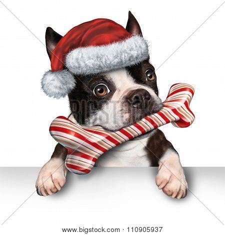 Christmas Holiday Dog