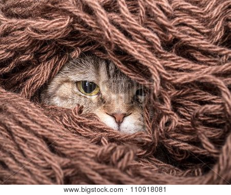Cat In A Pile Thread Woolen Yarn