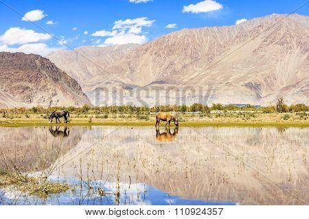 Horse on pond