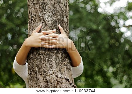 Hands Hugging A Trunk Of A Tree In Summer Park