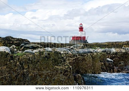 Red And White Lighthouse, Seals On Rocks