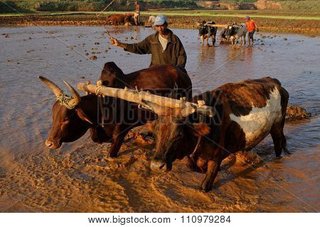 Betafo rice fields