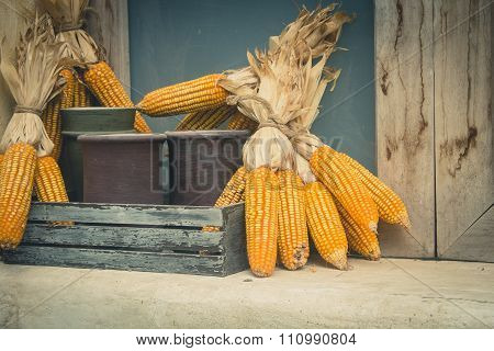 dried corn cob on wooden rack