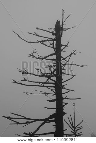 black and white photo of damaged bare tree in the mist poster