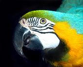 The head of a parrot poster
