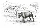 Illustration of lonely Lioness In The Savannah poster