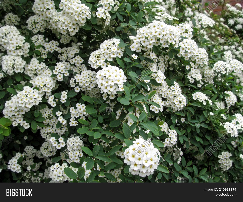Elegant Floral Texture Image Photo Free Trial Bigstock