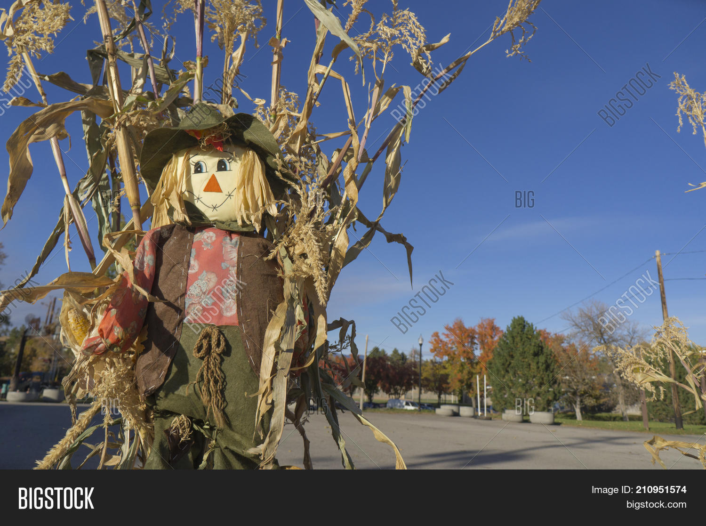 Scarecrow Corn Stalk Image Photo Free Trial Bigstock