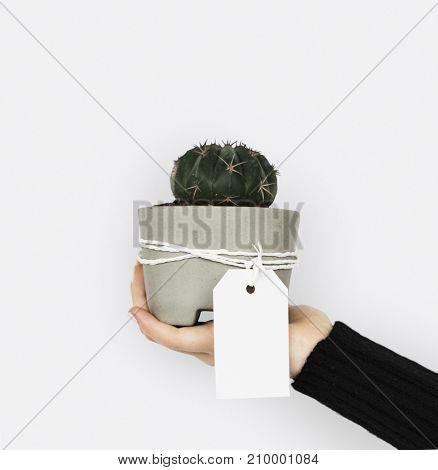 Love Design Sign Symbol Gift Plant Cactus