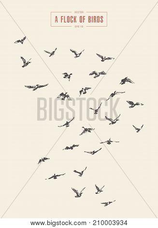 A flock of birds, hand drawn vector illustration, sketch