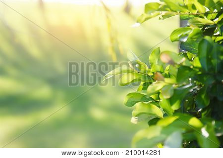 Green leaves on the green background, outdoors, background