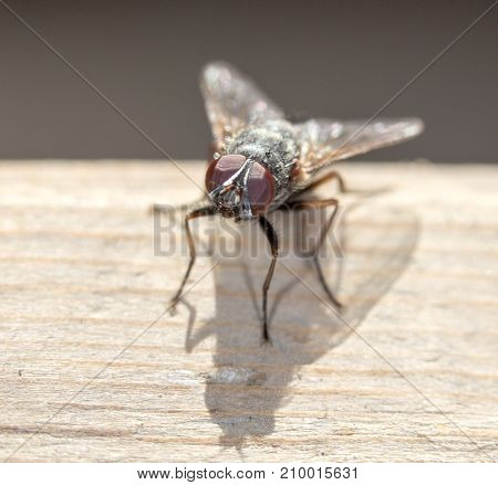 House fly close up . In the park in nature