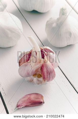 Garlic bulb and Garlic cloves on white wooden background. Healthiest fresh vegetables.