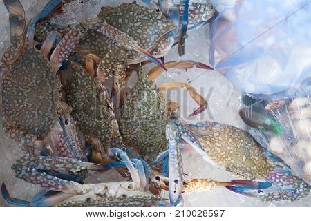 Blue crab in ice for sale on market