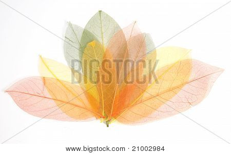 Assorted Autumn Leaves
