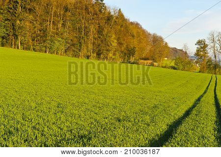Track of tractor on the green grass in Alps. Swiss forests and pastures early in the morning. Agriculture in Switzerland pastures around the village