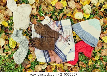 Warm clothing and accessories laid on the fallen leaves above view