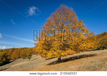 Beautiful autumn landscape in Transylvanian villages, Romania