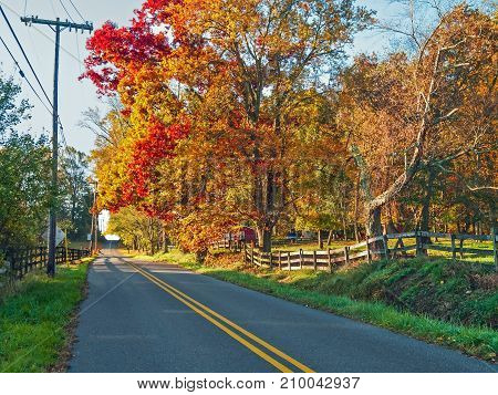 Changing colors of the Autumn leaves in Upper Freehold New Jersey.