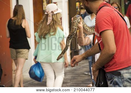 Czechia People Show And Rent Boa Snake For Take Photo At Small Alley From Charles Bridge Go To Old T