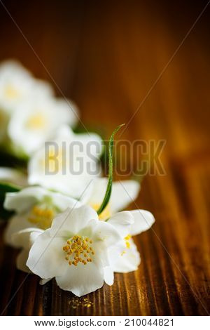 White beautiful jasmine flower on wooden background